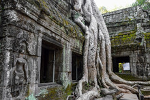 Ankor Wat, A 12th Century Historic Khmer Temple And UNESCO World Heritage Site. Arches And Carved Stone With Large Roots Spreading Across The Stonework. ,Angkor Wat