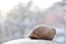 Seashell On A Light Background