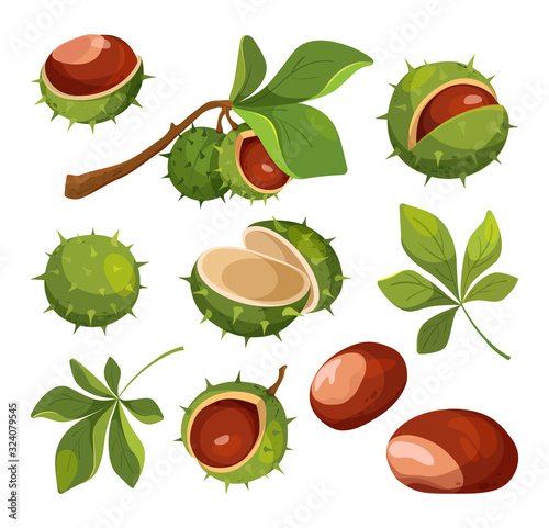 Photo Set of cartoon chestnuts, leaves and peels, vector illustration.