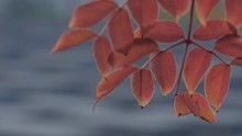 Pull Focus From Autumn Leaves ...