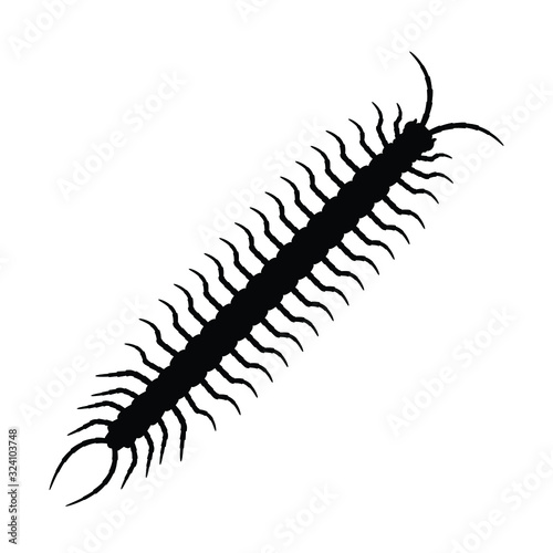 Photo Centipede silhouette vector, insect illustration