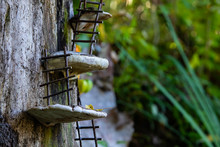 A Close Up Macro Shot Of Miniature Handmade Ladders Resting On Mushrooms Climbing Up A Tree Stump, Whimsical Fairy Scene In A Forest With Copy Space