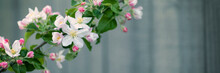 Apple Tree With White Flowers ...