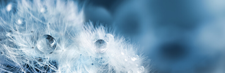Fluffy dandelions with dew drops, natural blue blurred spring background, close-up. Copy space. Soft focus abstract background.