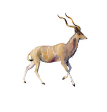 Handpainted Watercolor Kudu An...