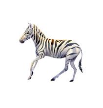 Handpainted Watercolor Zebra I...