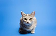 Cute Tabby Cat Is Looking Curi...
