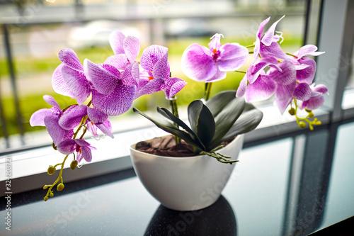 Obraz na płótnie pink orchid in the pot