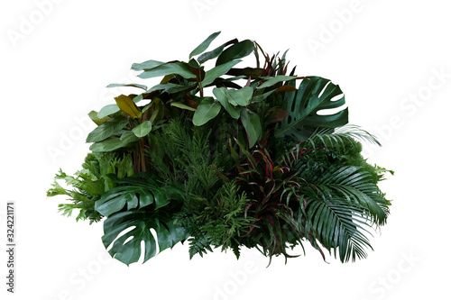 Obraz Tropical foliage plant bush (Monstera, palm leaves, Calathea, Cordyline or Hawaiian Ti plant, ferns, and fir) floral arrangment nature backdrop isolated on white with clipping path. - fototapety do salonu