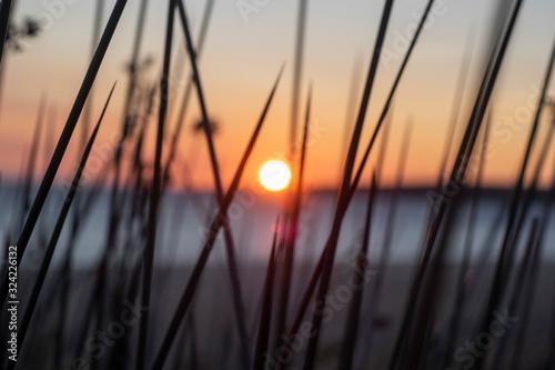 Fotografie, Obraz Puesta de sol entre juncos de la orilla