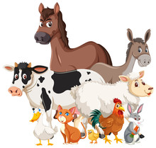 Many Farm Animals On White Background