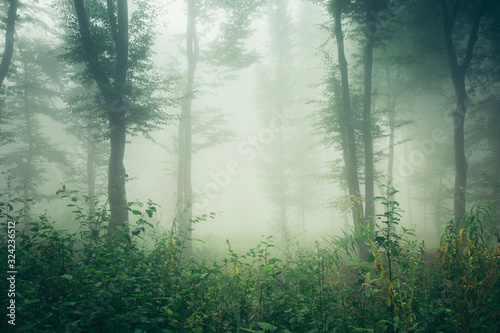 green summer woods, misty forest landscape Canvas-taulu