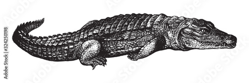Nile crocodile (Crocodylus niloticus) / vintage illustration from Brockhaus Konv Fototapet