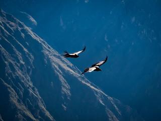 Panel Szklany Optyczne powiększenie Birds flying in the mountains