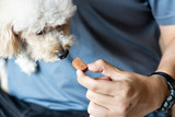 Fototapeta Zwierzęta - Series of person feeding pet dog with preventive heartworms chewable