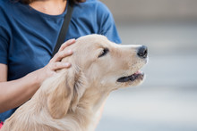 Woman Hand Patting White And Brown Dog Head.