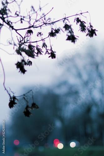 Valokuvatapetti Aberration chromatique