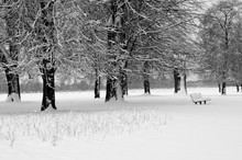 Trees And A Bench In Snow, Hom...