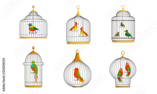 Photo Colorful Parrots in Cages Collection, Cute Birds in Birdcages Vector Illustratio