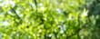 Leinwandbild Motiv Spring background - abstract banner - green blurred bokeh lights