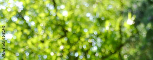 Foto Spring background - abstract banner - green blurred bokeh lights