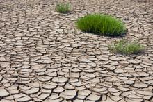 France, Provence, Camargue, Plants On Eroded Soil At Marshland