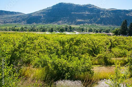 Landscape rural orchards near Tonasket Washington Fototapeta
