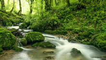 Under Woods And Small Streams In The Bugey Forest.