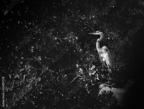 Cuadros en Lienzo heron in water