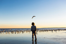 Rear View Of Boy Looking At Seagulls On Beach