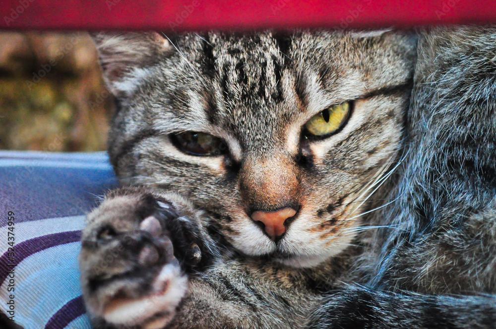 Fototapeta Olhar 43 felino