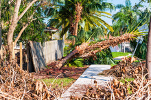 Storm Damage In Florida. Fallen Branches And Trees Portray The Aftermath Of Hurricane Irma In Miami.