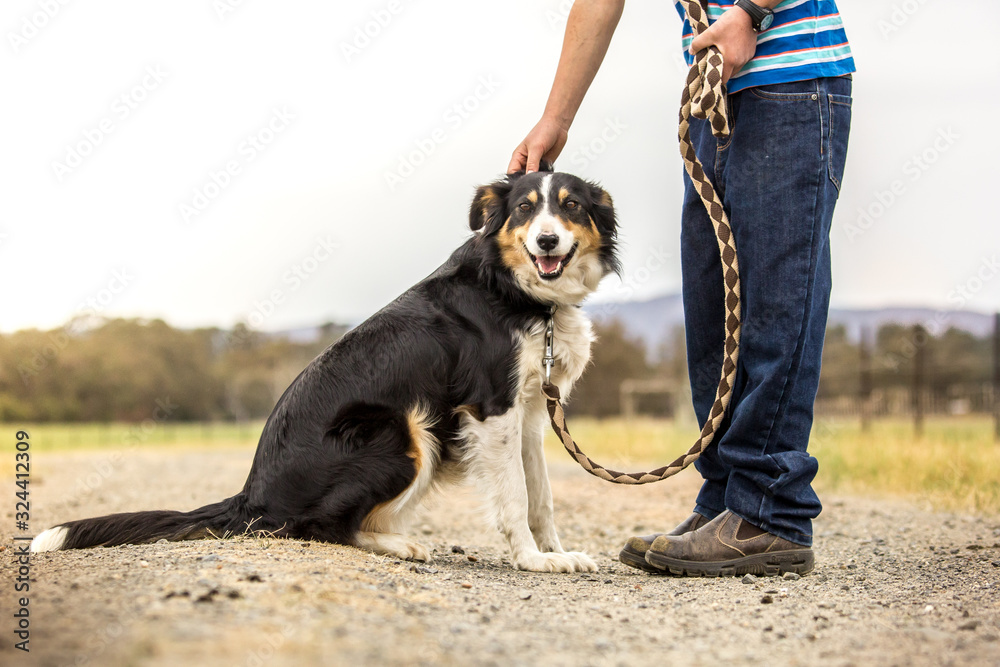 Fototapeta Dog with boy on  a walk in the country on a farm / Dog being petted by owner