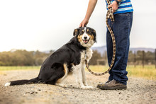 Dog With Boy On  A Walk In The Country On A Farm / Dog Being Petted By Owner