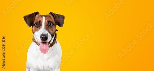 Photo Dog.