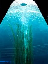 Veartical Image Of Big Aquariu...
