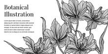 Black And White Iris Flower Illustration