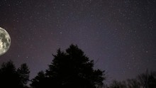 Full Moon Orbiting Above Tree ...
