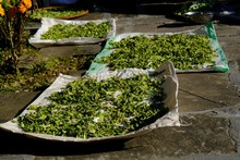 Canvas With Chopped And Drying Up Green Vegetables Achoccha (also Called Wild Cucumber, Caihua, And Korila) In Mountain Village In Himalayas, Nepal. It Is Used To Traditional Nepalese Dish Dal Bhat