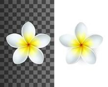 Plumeria Tropical Flowers 3d V...