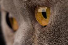 Yellow Eye Of A Gray Striped Cat Close-up, Macro Shot
