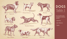 Collection Of Nine Dog Vector ...