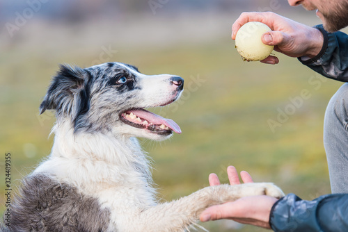 Leinwand Poster Dog training with a ball in the park