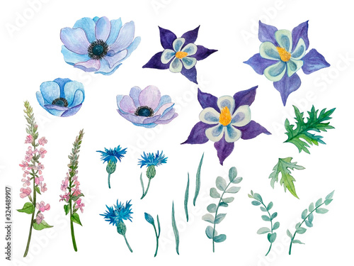 Photo set of wild flowers, watercolor illustration