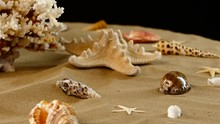 Variety Of Colorful Sea Shells...