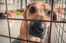 Portrait Of Sad Dog In Shelter...