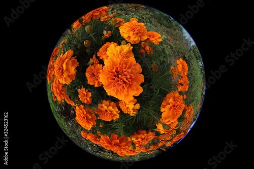 Marigolds growing in garden. circular fisheye photo Canvas Print