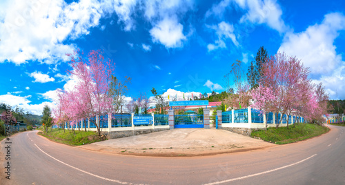 A landscape of an upland primary school in spring morning with cherry blossom tr Fototapet