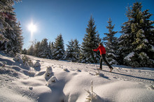 A Women Cross-country Skiing In The Sunny Wintry Forest