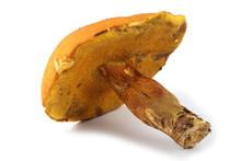 Xerocomus Subtomentosus (brown...